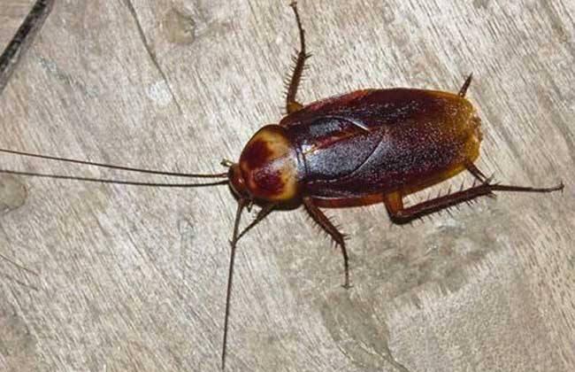 定期清潔抵制蟑螂