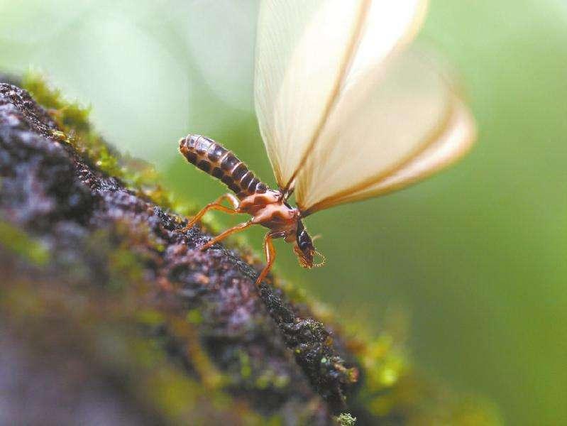 白蟻侵蝕家園