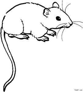 老鼠出沒無常