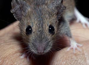 看完覺得老鼠可愛就是真愛了