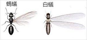 see-termite-look