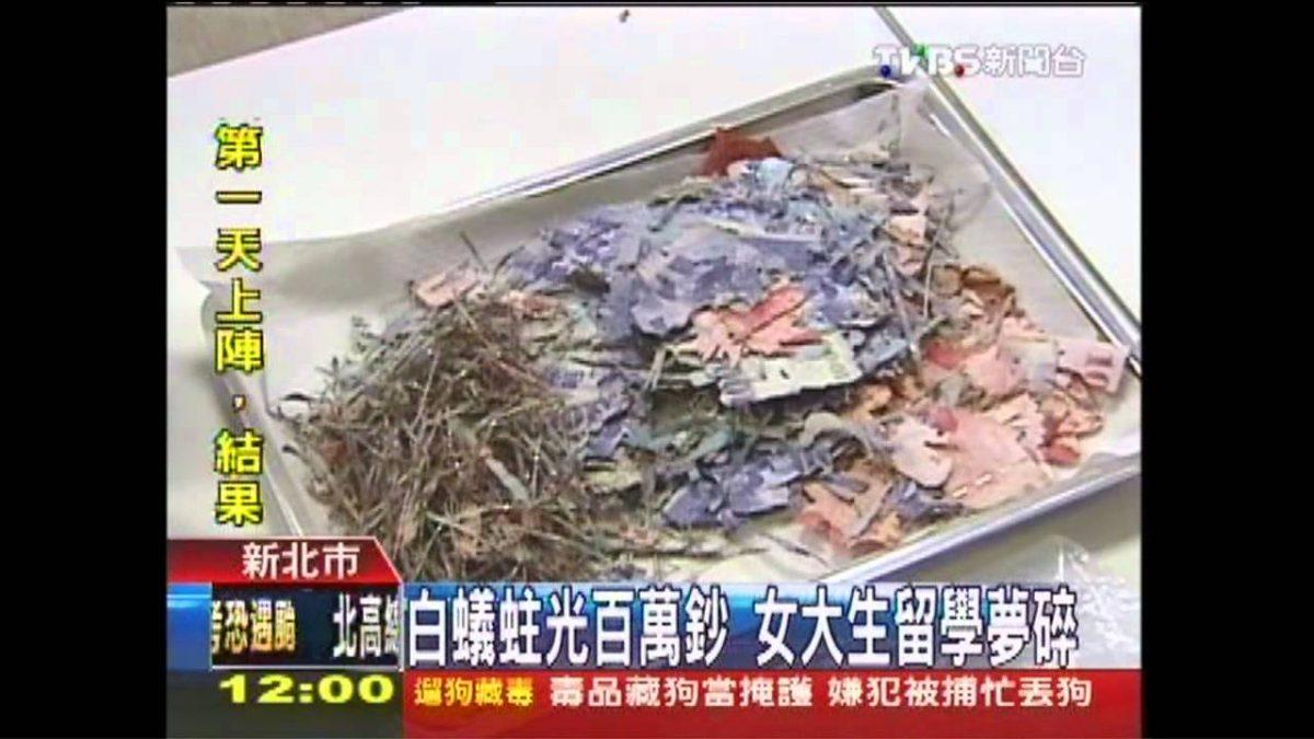 白蟻蛀光百萬鈔!!女大生留學夢碎!!!