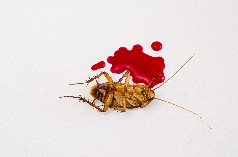 蟑螂Q和A