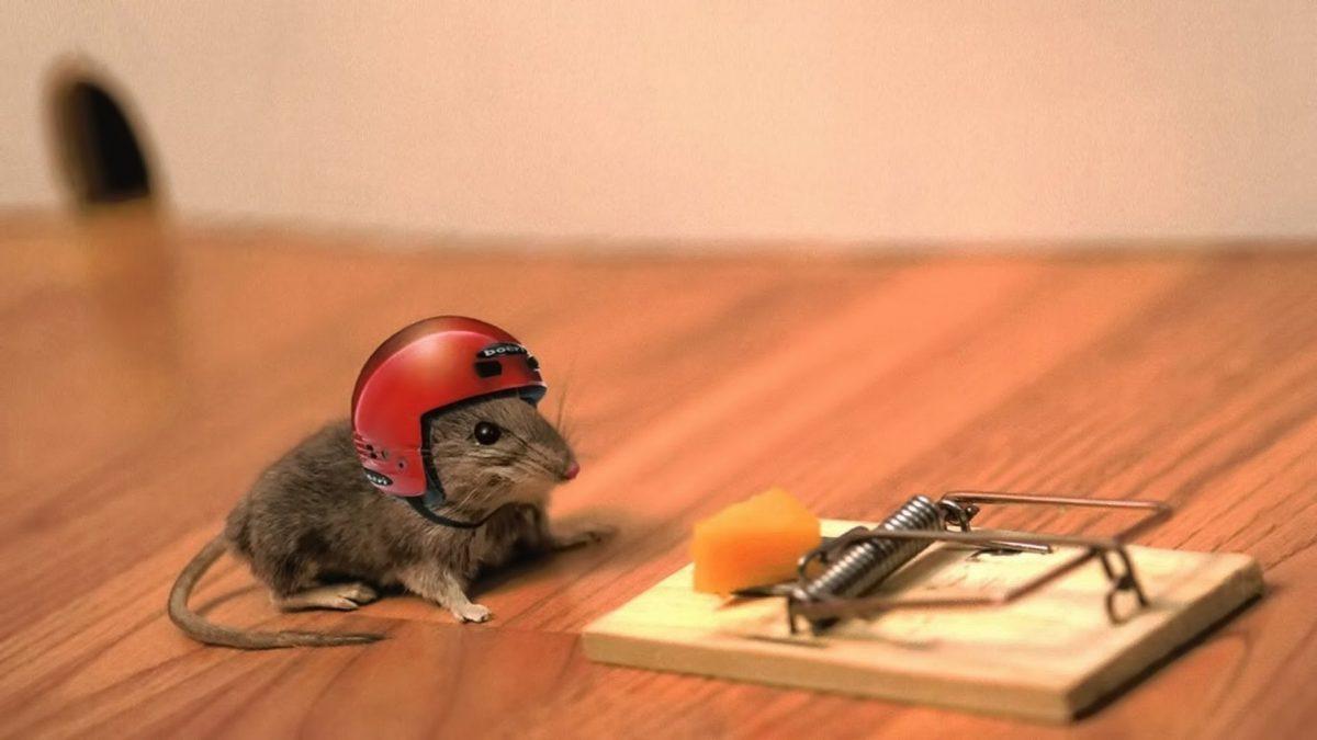 不用殺也能趕老鼠