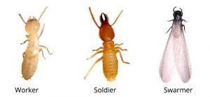 personnel-sprayed-termite-control