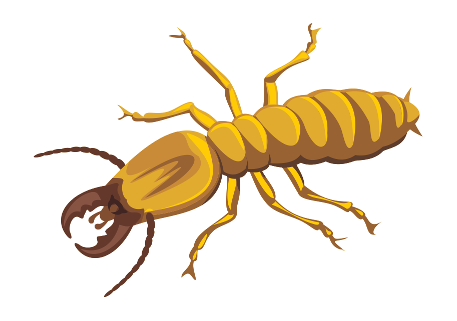 termite-control-to-be-sustained