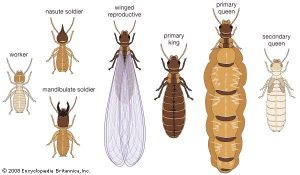 termite-has-opportunity-enjoy-wings