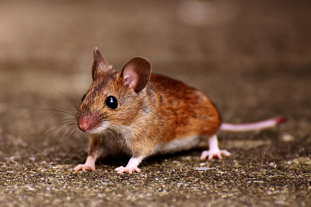 大學學測考場出現老鼠!四十一名考生移轉考場