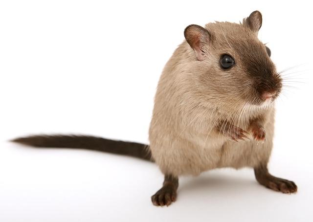 老鼠竟然也喜歡開車?