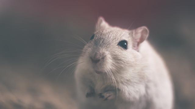 經驗豐富的老鼠防治團隊是您的最佳首選