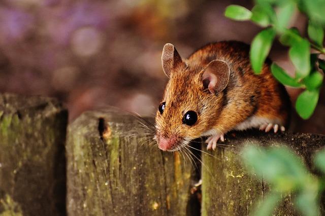 驅老鼠團隊值得您信賴